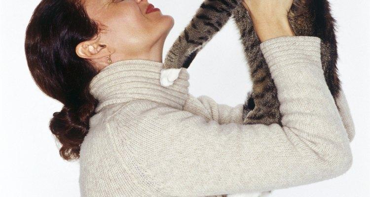 A perda de pelo em gatos pode ter vários motivos