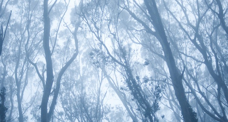 Eucalyptus trees can crowd out native trees in the United States.