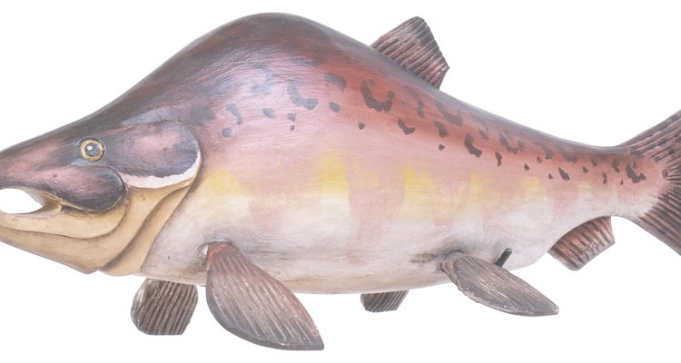 Se consideran como una especie invasiva potencialmente dañina en lagos y ríos de toda la provincia.