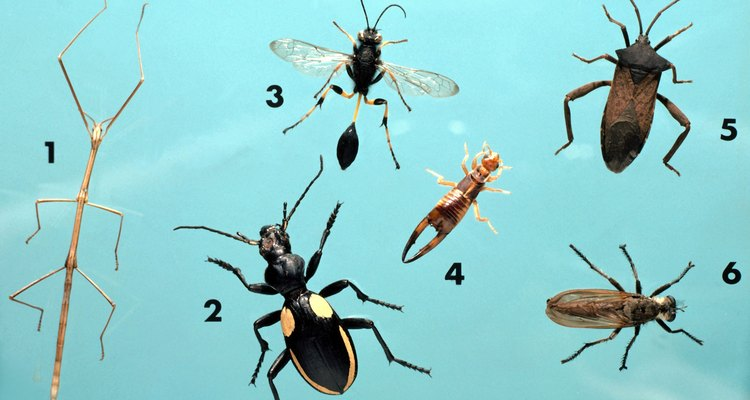 Diferentes insetos podem habitar sua cama