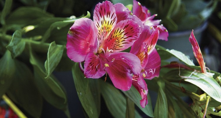 Haz lo mismo con el tallo de orquídeas.