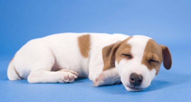 Cão inconsciente