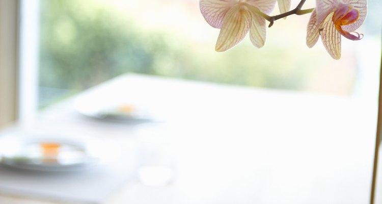 En comparación con otros tipos de plantas, las orquídeas pueden ser una de las más fáciles de propagar a partir de un esqueje.