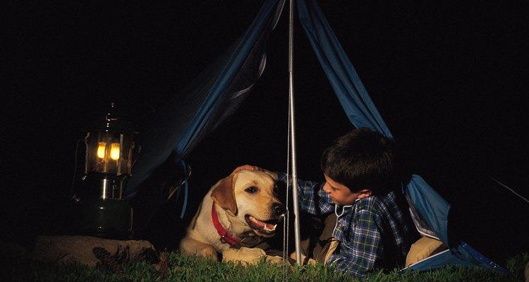 Los animales están permitidos en la mayoría de los campings cerca de Grand Teton National Park.