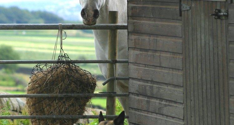 Con una red de heno, el caballo estará ocupado todo el día.