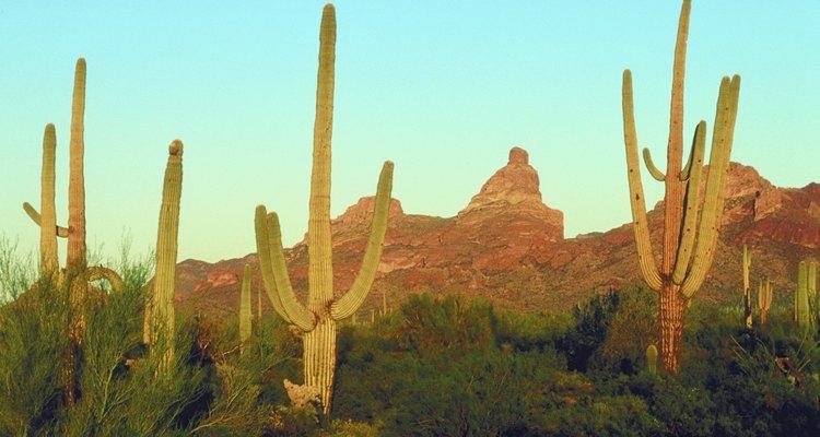 Repite la aplicación de fertilizante una vez al mes hasta el otoño, cuando el cactus deja de crecer.