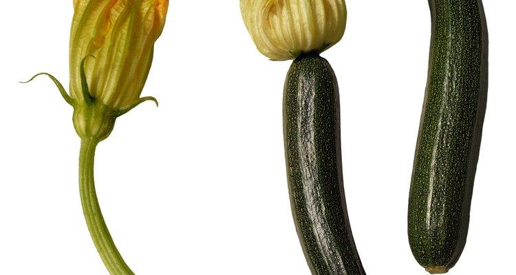 El ovario de la flor femenina del zapallo, a la derecha, es la que madurará en un fruto.