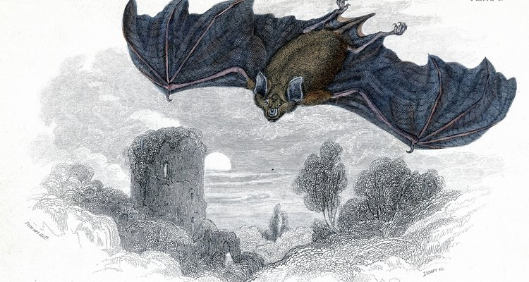 Bats have a strong sense of hearing and often have large ears.