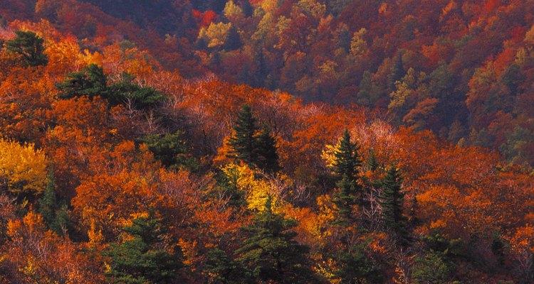 Las excursiones de otoño son especialmente coloridas en la zona Blowing Rock.