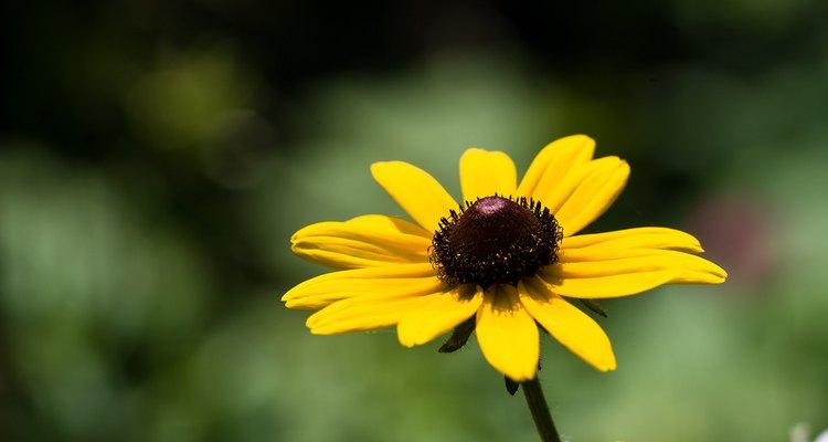 Muitas plantas que são tolerantes à seca florescem quando plantadas em solos arenosos