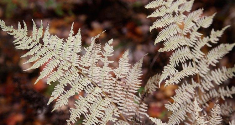 Todas as plantas estão incluidas no reino Plantae