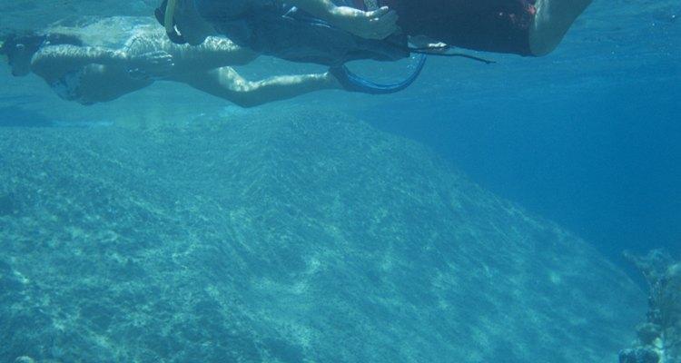 Ponte tu equipo de esnórquel y visita la vida marina cerca de St. Pete Beach, Florida.