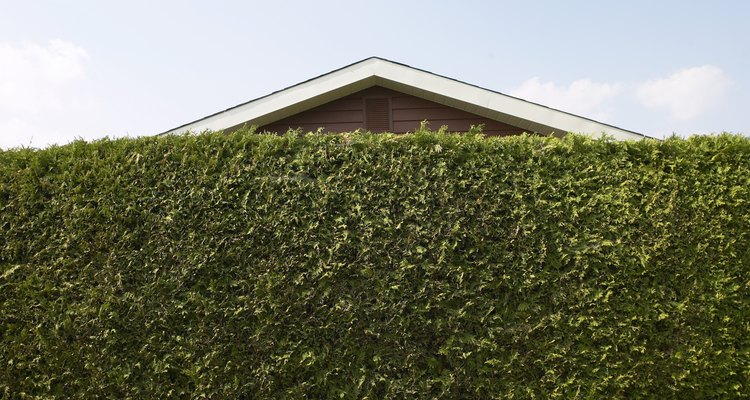 A tall hedge can block annoying neighbour noise.