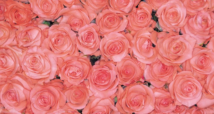 Cores complementares e contrastantes combinam bem com rosa claro