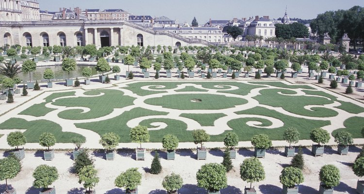 Common box is widely used as a hedging plant in parterre gardens.