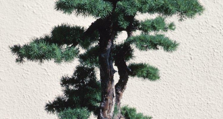 Evita colocar el bonsai junto a los cristales de las ventanas.