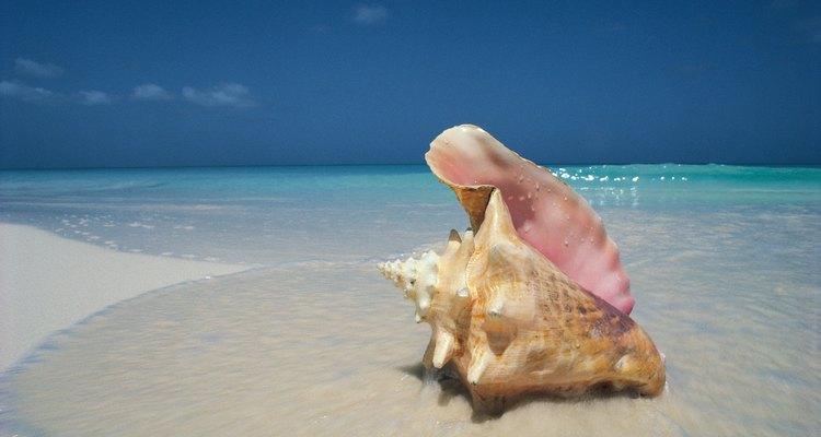 As conchas do mar têm um significado muito maior do que se poderia pensar