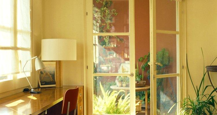 Durante el invierno, ubica la planta al lado de una ventana con orientación este o sur para que reciba al menos 4 horas de luz solar directa.