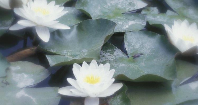 Saiba como fazer uma manutenção adequada de seu lago artificial