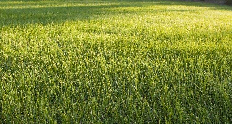 Lawn moth larvae can damage lawns.