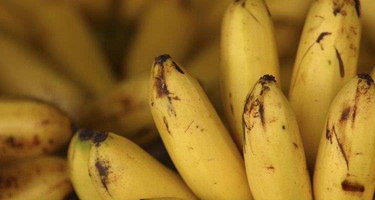 As bananas são ricas em etileno, um hormônio que induz a maturação