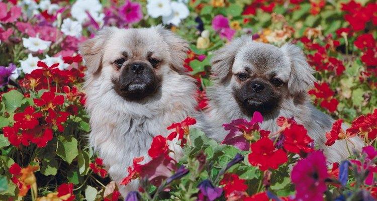 Quem gosta de cachorro quer o seu bem seguro no jardim