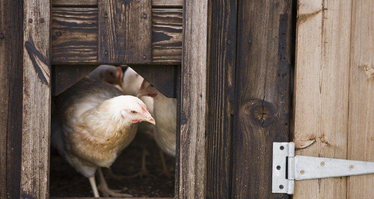 Construye un gallinero para varias aves.