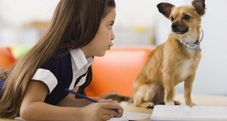 Al elegir un perro, considera si su personalida es compatible con tu estilo de vida.