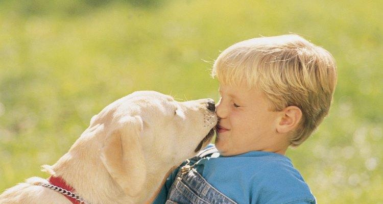 El lamido de un perro es un signo de afecto y de sumisión.