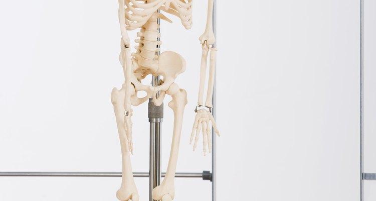 Qual é a porcentagem do corpo que é composta de ossos?