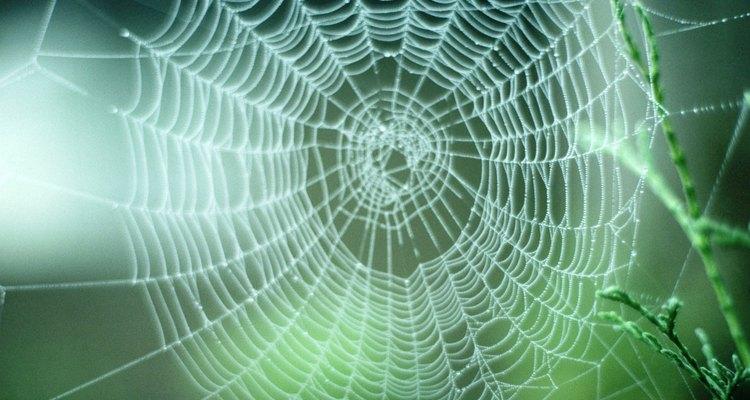 Você saberá quando foi mordido por uma aranha pois será dolorido