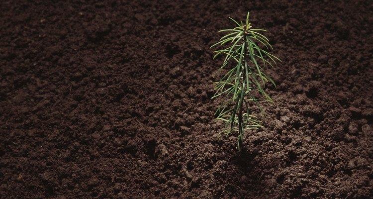 Hay varios métodos para conservar el suelo.