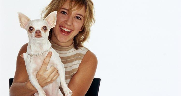 Las infecciones atacan principalmente las orejas de los cachorros.