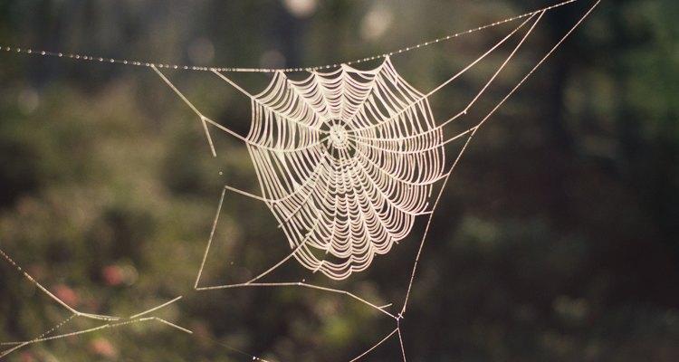 La presencia de las telas de araña significa que las arañas están al acecho.
