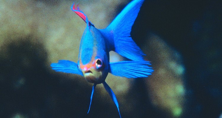Los metales comunes pueden destruir a tu pez de agua salada.