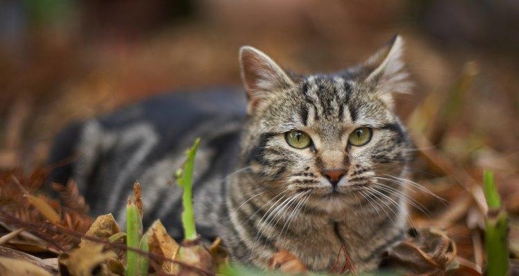 Torne sua casa, quintal ou jardim repelente contra gatos