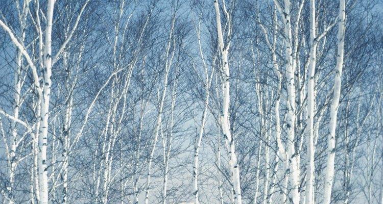 El paisaje de Duluth durante el invierno permite realizar una gran cantidad de actividades al aire libre.