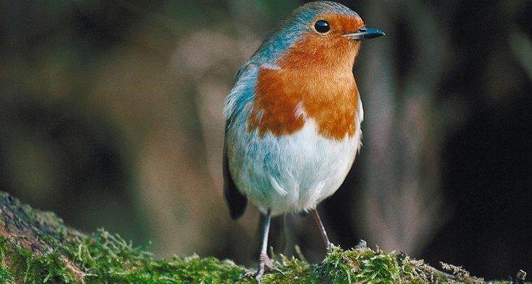 Los pájaros comprenden el grupo más grande de aves en el mundo