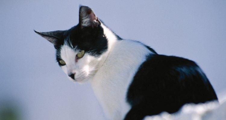 Estimule a respiração do gato recém-nascido