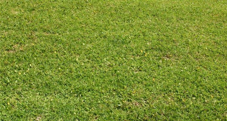 Cuide do seu gramado