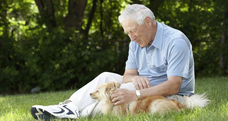 Pare de fazer cócegas no cachorro se ele gritar, parecer sentir dor ou tentar se afastar