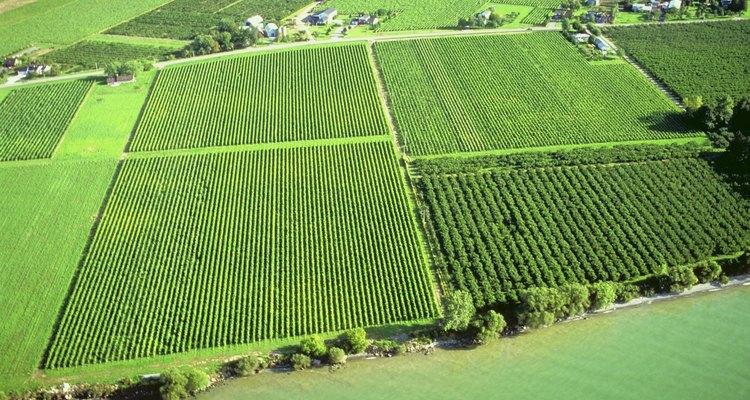 Los granjeros rocían fungicidas en las cosechas para prevenir las enfermedades.