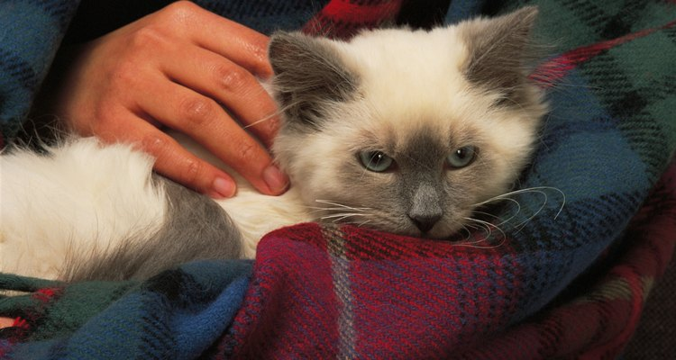 Calças de gatos mantêm seu animal de estimação confortável e seco