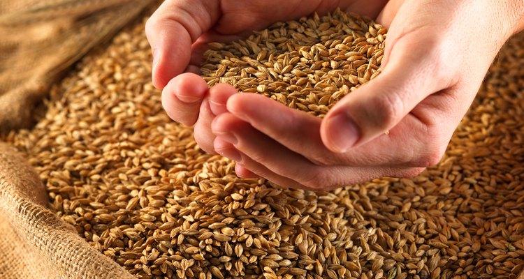 El trigo es el grano más mencionado en la Biblia y se sigue utilizando en el siglo XXI.