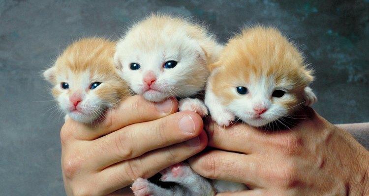 Os donos podem ajudar a gata a libertar o seu papel maternal
