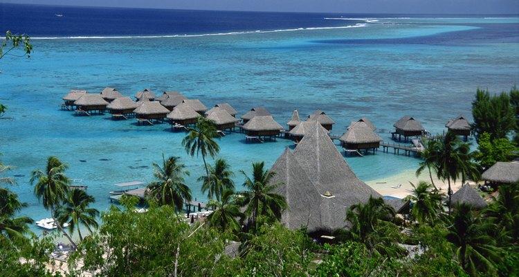 A noni cresce no Taiti
