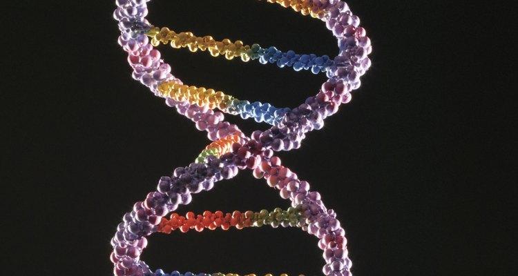 O DNA carrega informações sobre a sua paternidade biológica