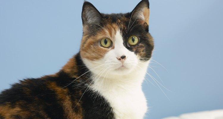 Tu gato puede infectarse con tenias y trasladar los huevos a tu cama.