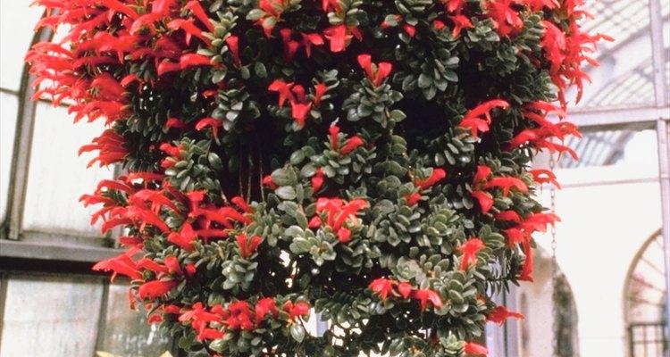 Las plantas son excelentes elementos decorativos que traen beneficios para la salud.