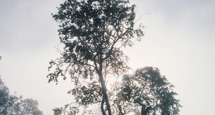 Los bosques tropicales son ricos en vida, incluyendo las tribus humanas nativas.